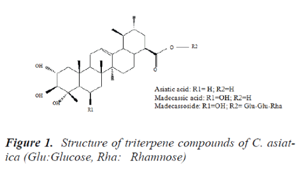 biomedres-Structure-triterpene-compounds