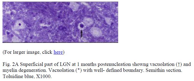 biomedres-Superficial-part