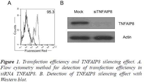 biomedres-TNFAIP8-silencing-effect