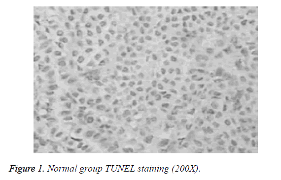 biomedres-TUNEL-staining