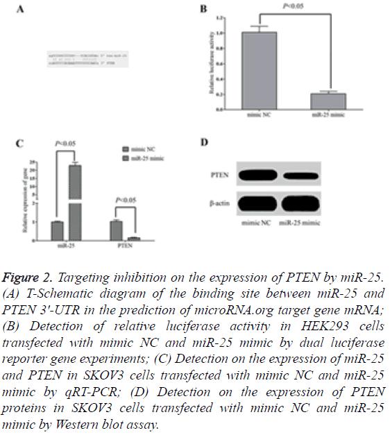 biomedres-Targeting-inhibition