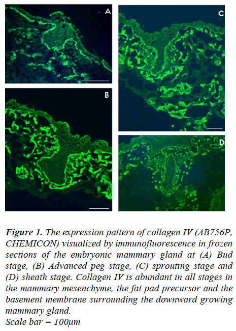 biomedres-The-expression-pattern-collagen