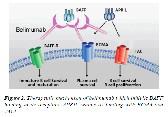 biomedres-Therapeutic-mechanism