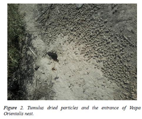 biomedres-Tumulus-dried