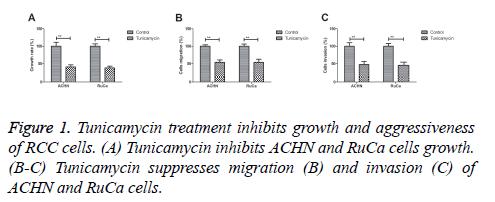 biomedres-Tunicamycin-treatment