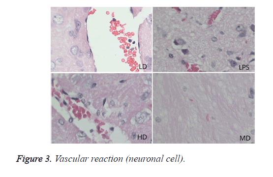 biomedres-Vascular-reaction