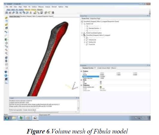 biomedres-Volume-mesh-Fibula