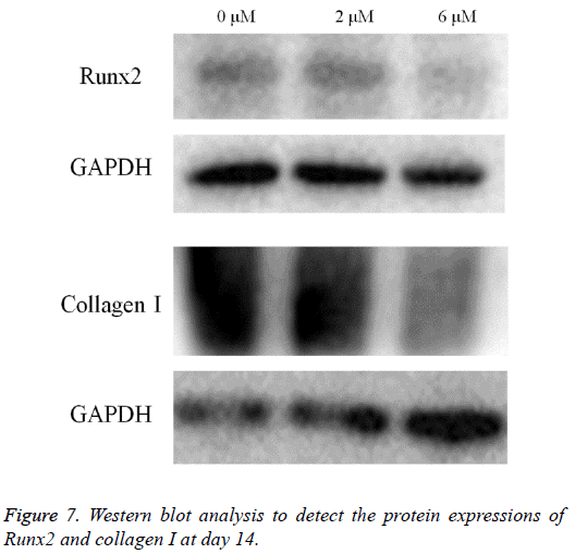 biomedres-Western-blot-analysis