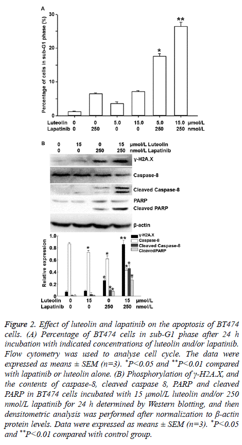 biomedres-Western-blotting