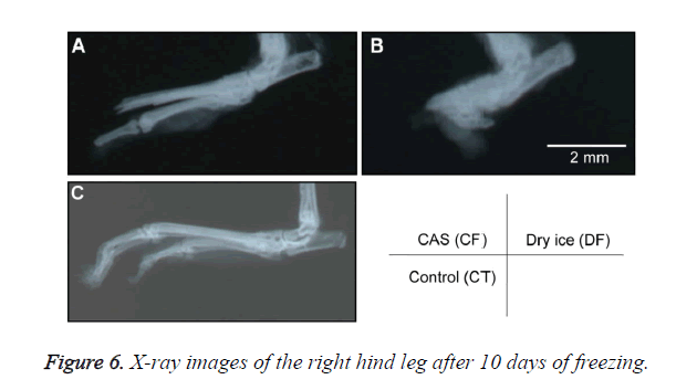 biomedres-X-ray-images