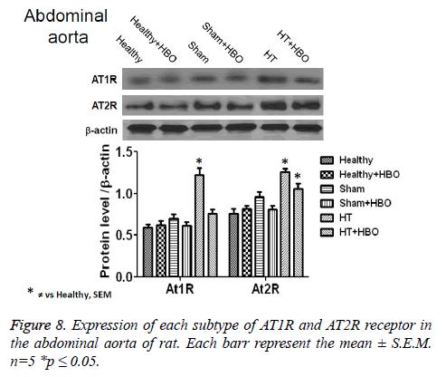 biomedres-abdominal-aorta-rat