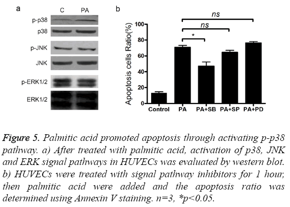 biomedres-acid-promoted-apoptosis