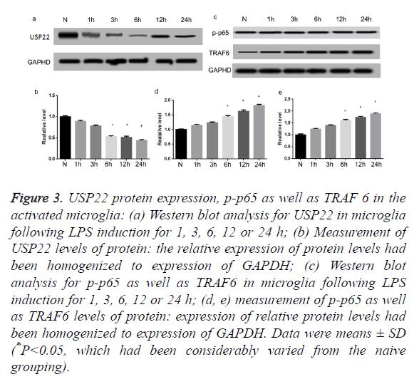 biomedres-activated-microglia