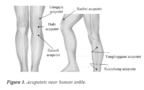 biomedres-acupoints-near-human-ankle