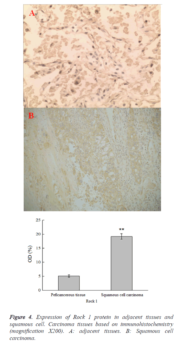 biomedres-adjacent-tissues