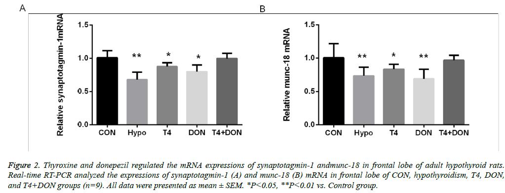 biomedres-adult-hypothyroid-rats