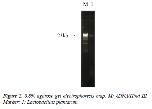 biomedres-agarose-gel