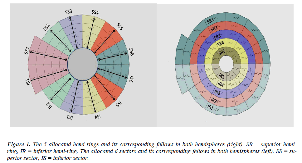 biomedres-allocated-hemi-rings