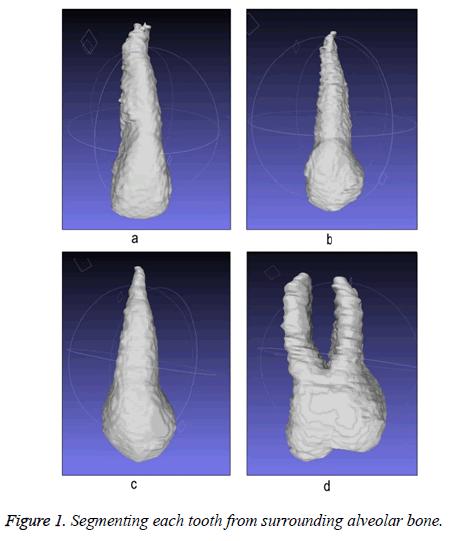 biomedres-alveolar-bone