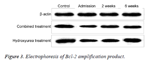 biomedres-amplification-product