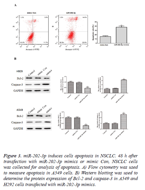 biomedres-analysis-apoptosis