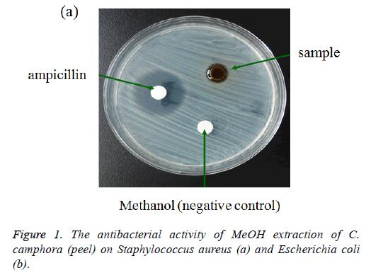 biomedres-antibacterial-activity