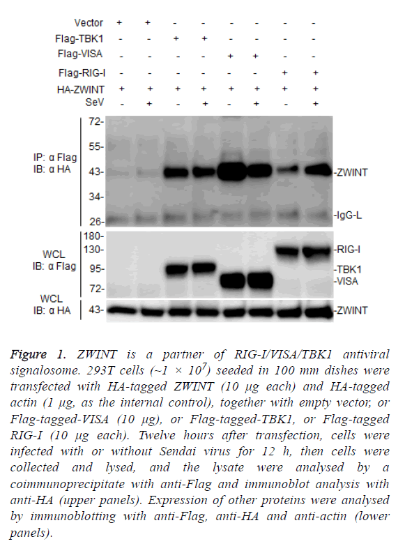 biomedres-antiviral-signalosome
