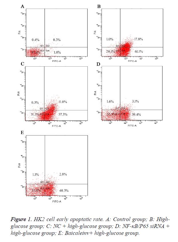 biomedres-apoptatic-rate