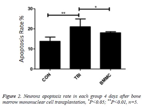 biomedres-Neurons-apoptosis