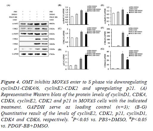 biomedres-apoptosis-detection