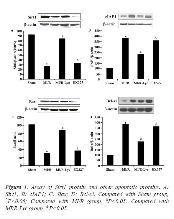 biomedres-apoptotic-proteins
