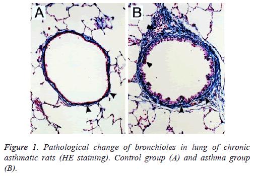 biomedres-asthmatic-rats