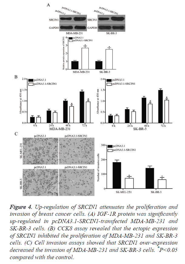 biomedres-attenuates-proliferation