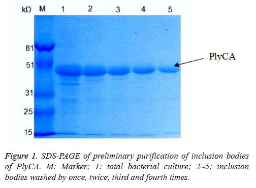 biomedres-bacterial-culture