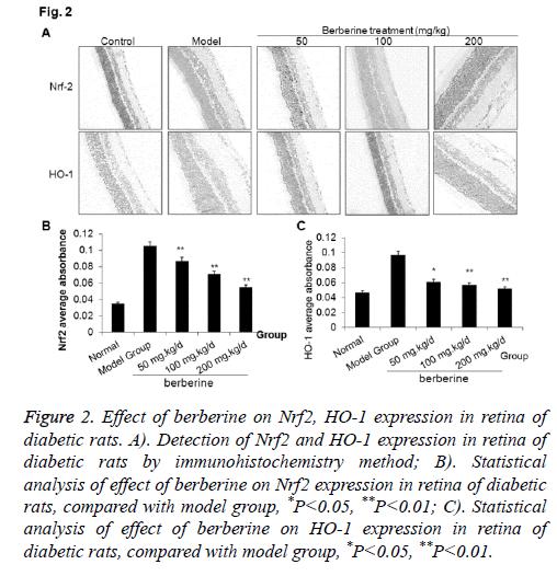 biomedres-berberine-diabatic-rats