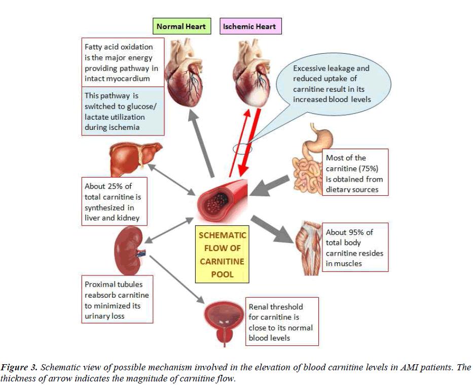 biomedres-blood-carnitine