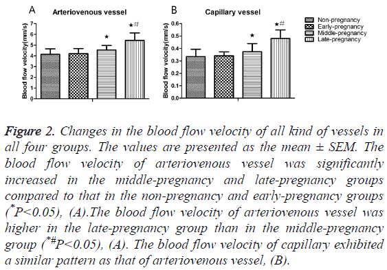 biomedres-blood-flow-velocity