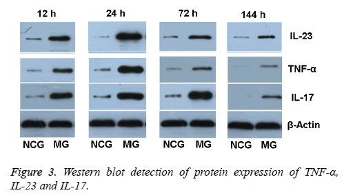 biomedres-blot-detection