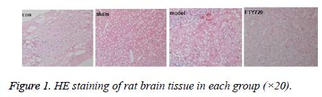 biomedres-brain-tissue