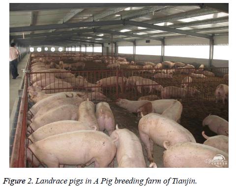 biomedres-breeding-farm