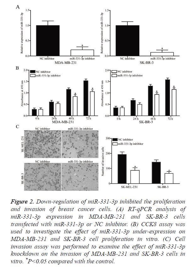 biomedres-cancer-cells
