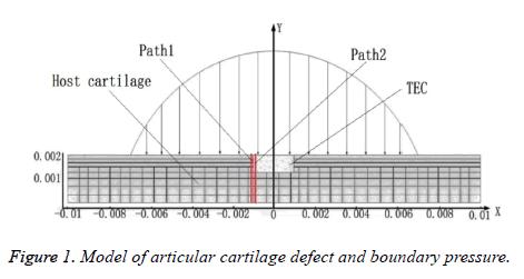 biomedres-cartilage-defect