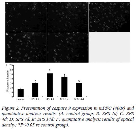 biomedres-caspase-expression