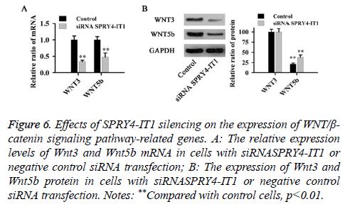 biomedres-catenin-signaling