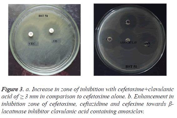 biomedres-cefetoxime-alone