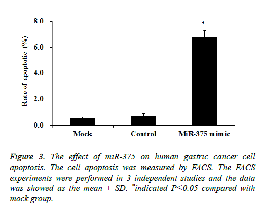 IJMS | Free Full-Text | AEG-1/miR-221 Axis Cooperatively