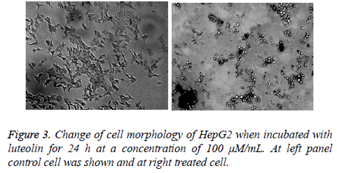 biomedres-cell-morphology