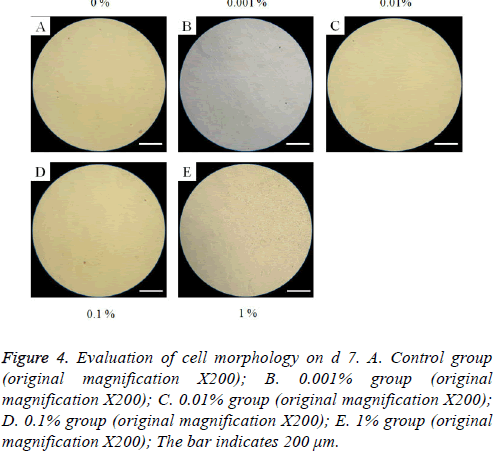 biomedres-cell-morphology
