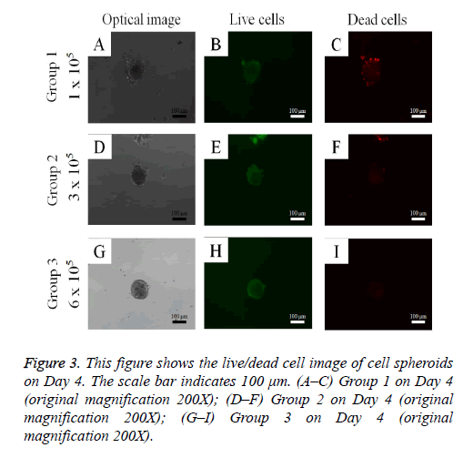 biomedres-cell-spheroids