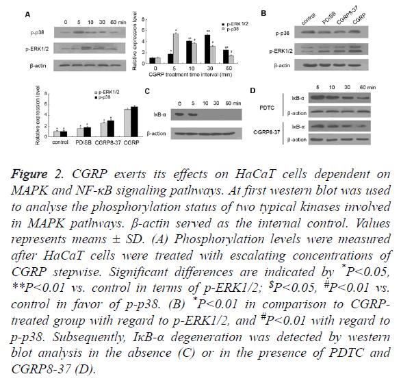 biomedres-cells-dependent
